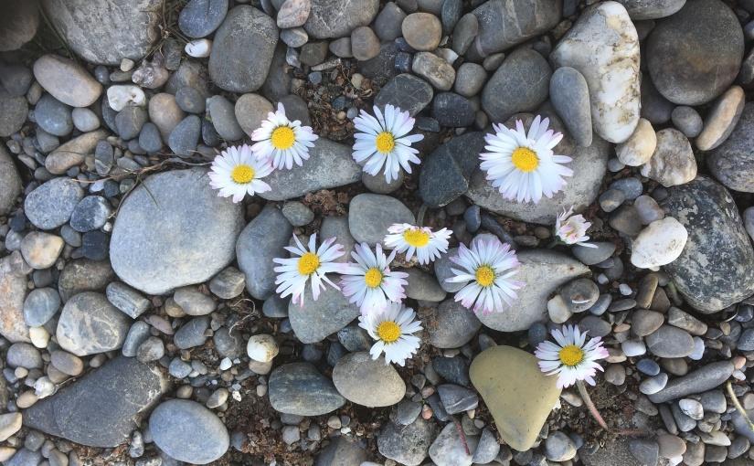 Wundervoller Natur-Tag