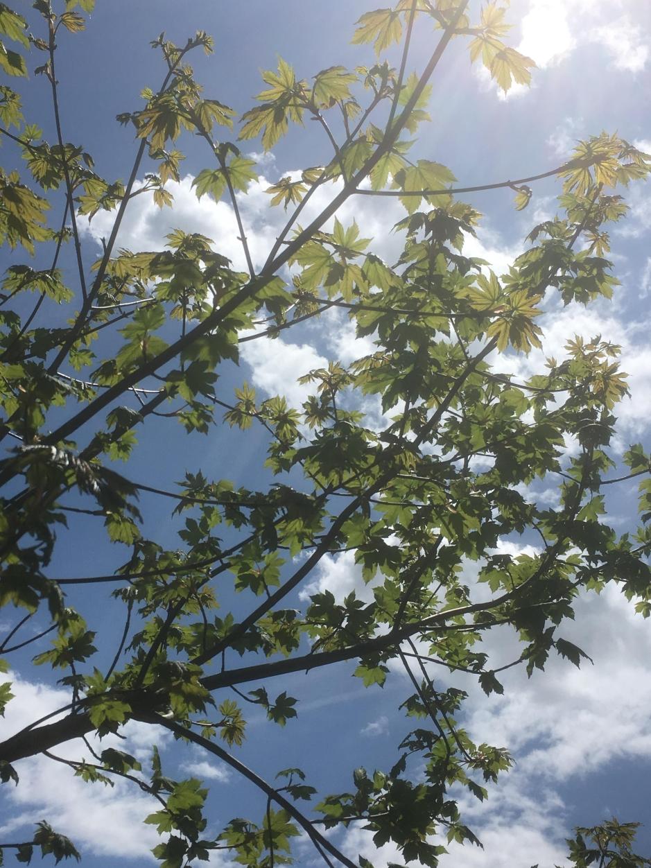 TREE blätter